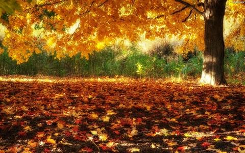 Photo medium liscie jesien drzewo opadle