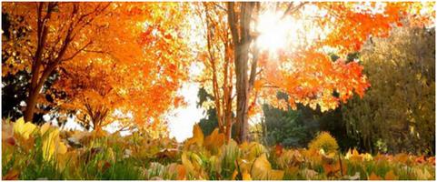 Photo small sesja jesienna