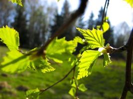 Photo small wiosna1